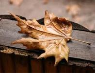Yapraklar sonbaharda neden dökülür?