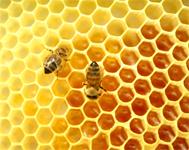 Arılar bal peteğini neden altıgen yapar?