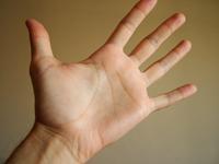 El parmaklarımızın uzunluğu neden aynı değildir?