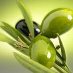 Zeytinyağı neden daha sağlıklıdır?