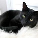 Kara kediler gerçekten uğursuzluk getirir mi?