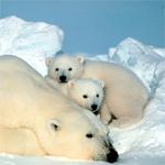 Bazı hayvanlar neden kış uykusuna yatar?