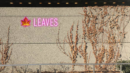 Leaves by Bertriced