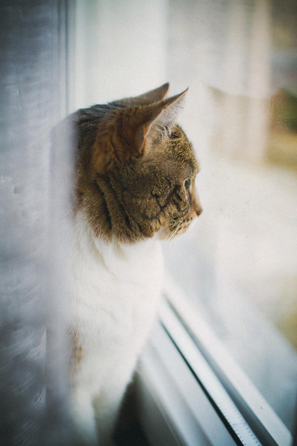 Cat at Window by Freacore