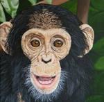 Young Chimpanzee