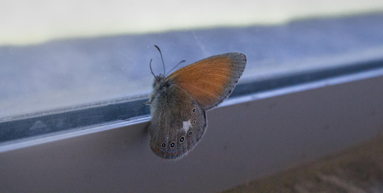 Butterfly by RFabio