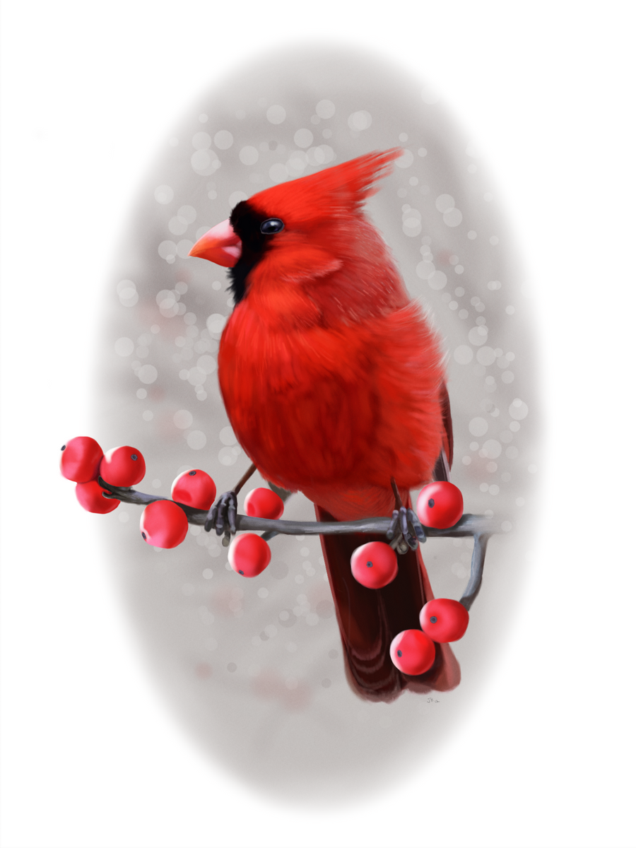 Winter Cardinal by ArtofJefferyHebert on DeviantArt