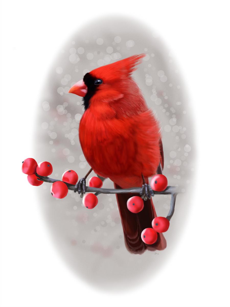 Winter Cardinal by ArtofJefferyHebert