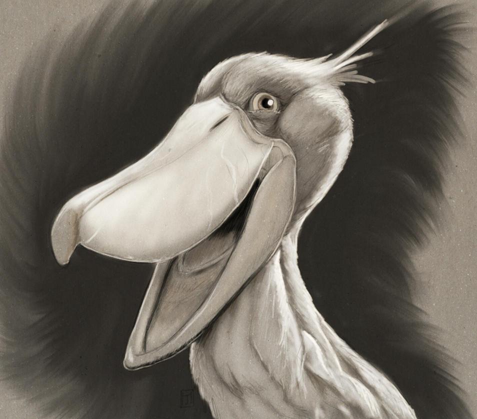 shoebill character sketch by ArtofJeffHebert