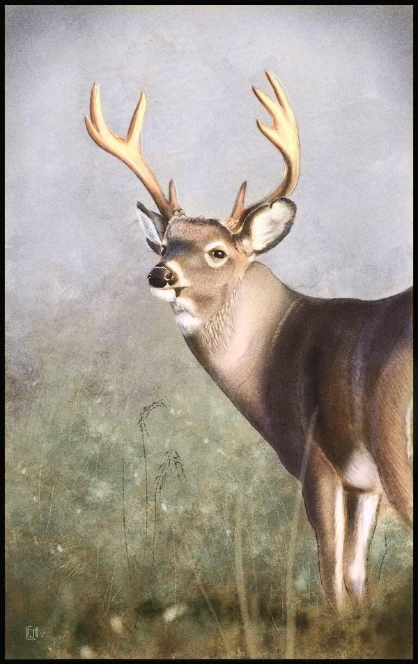 Brother Buck Colored by ArtofJeffHebert