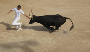 Run the cow 1