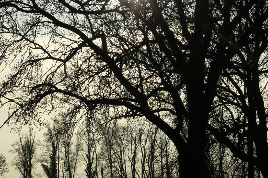 Black Woods by FiLH