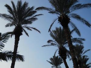 Israel Morning
