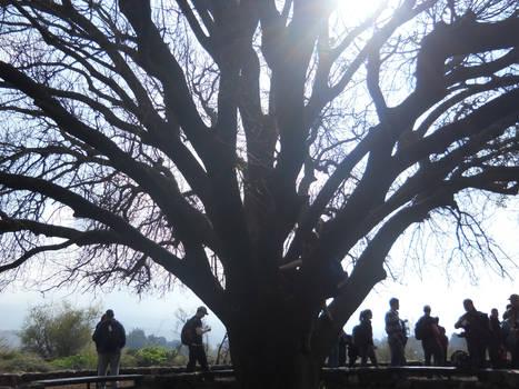 Biggest tree I have seen yet