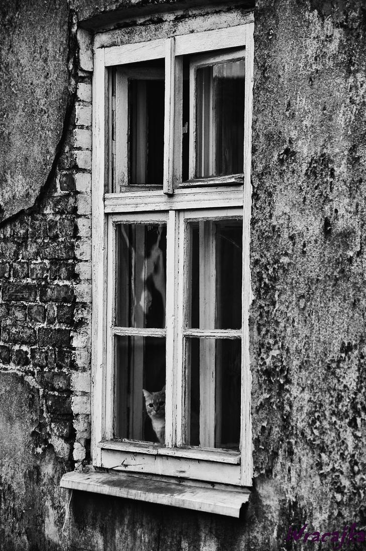 Pussy in the window by pszczolabzzz