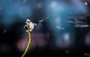 Transmettre by AranelPhoto