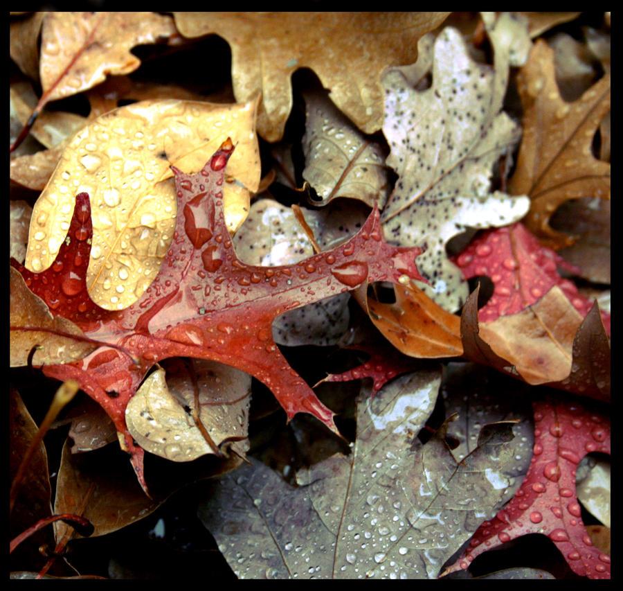 Autumn in Rain by RTurley