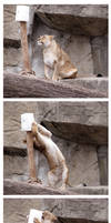 Lioness Play