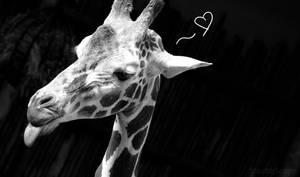 Love and Giraffe
