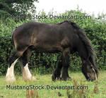 Random Horse Stock