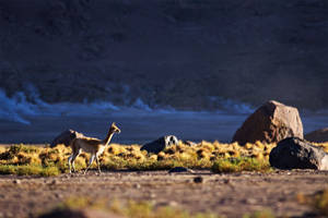 Llama for you by RitterRunkel
