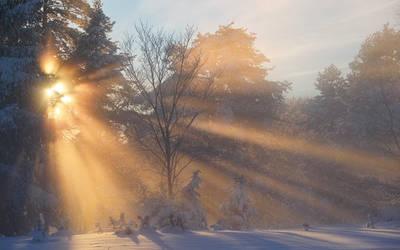 Winternebelsonnenstrahlen