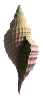 3D Seashell