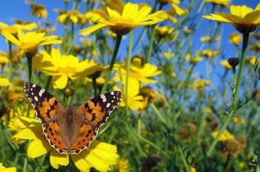 Butterfliy_freedom by nurisagaltici