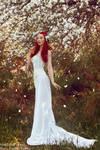 _White rose.