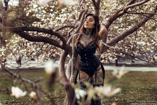 _Magnolia. II