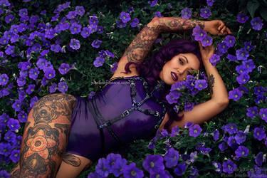 Lilac IV