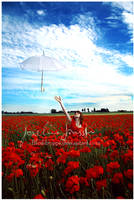 _Ocean of poppies. by josefinejonssonphoto