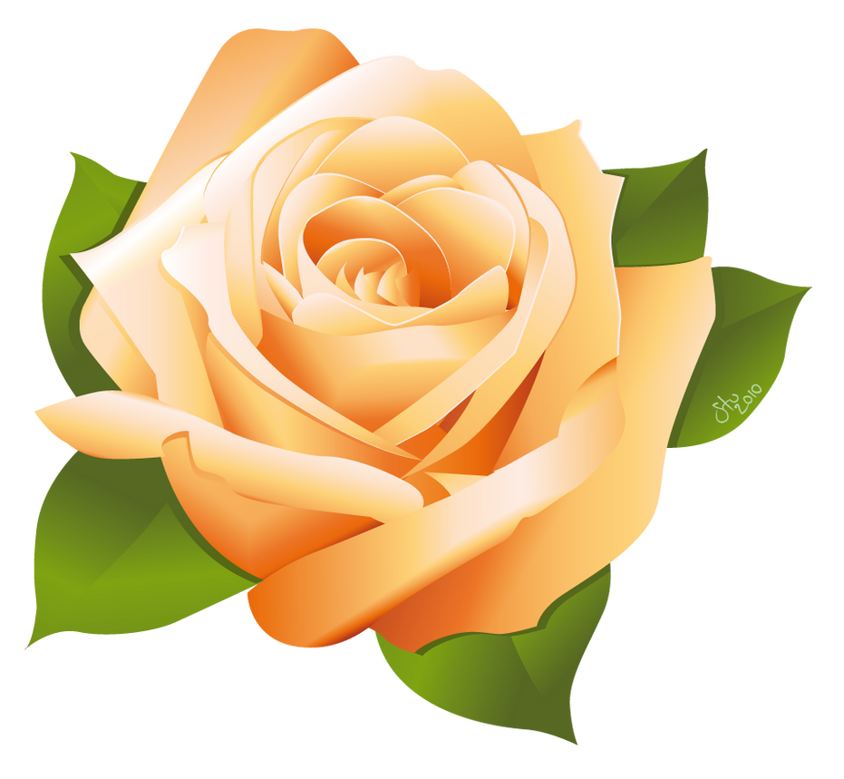 Rose Vector by StooBainbridge on DeviantArt