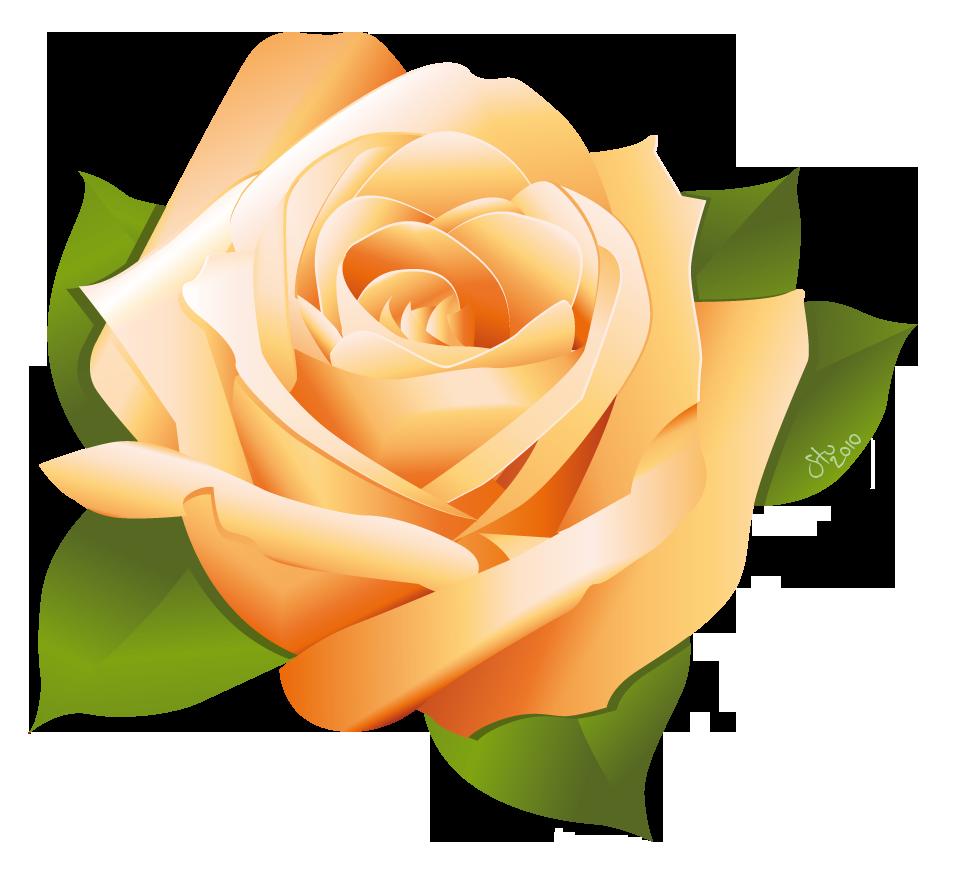 Vector Rose Flower Designs Free Download