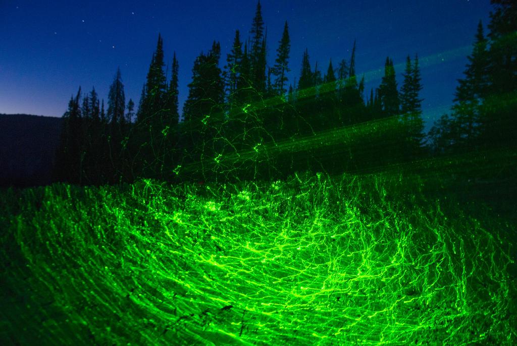 Rainbow Gathering Lasers by wokeuptopless