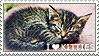 I love Kitties by WishmasterAlchemist
