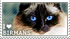 I love Birmans by WishmasterAlchemist