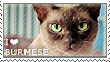 I love Burmese by WishmasterAlchemist