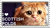 I love Scottish Folds by WishmasterAlchemist