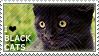 I love Black Cats by WishmasterAlchemist