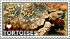 I love Tortoises by WishmasterAlchemist