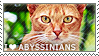 I love Abyssinians by WishmasterAlchemist