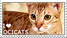 I love Ocicats