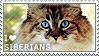 I love Siberians by WishmasterAlchemist