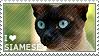 I love Siamese