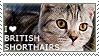 I love British Shorthairs by WishmasterAlchemist