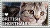 I love British Shorthairs