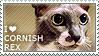 I love Cornish Rex by WishmasterAlchemist