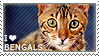 I love Bengals by WishmasterAlchemist