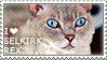 I love Selkirk Rex by WishmasterAlchemist